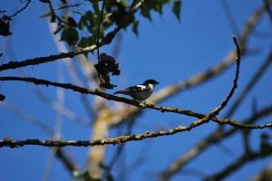 gal-birds2